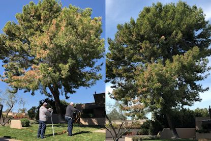 tree flagging before and after