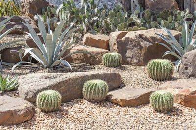 Cacti and Succulents in Arizona Landscaping