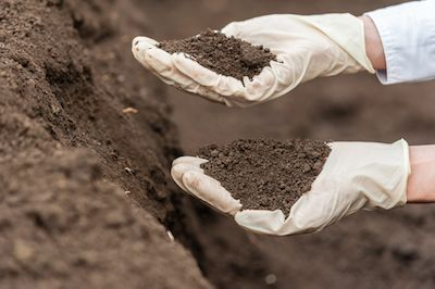 soil sample in gloved hand