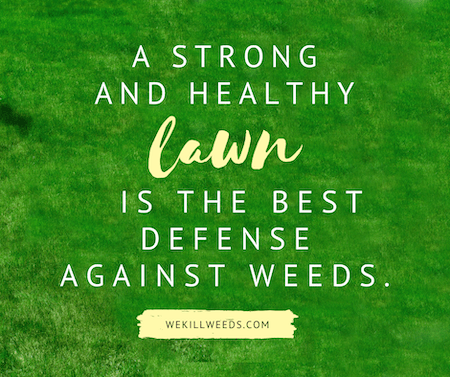 A strong and healthy lawn is the best defense against weeds