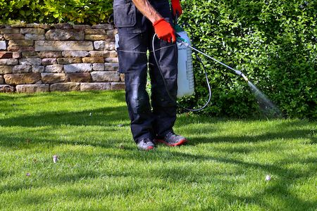 Man using pre-emergent spray to eliminate weeds