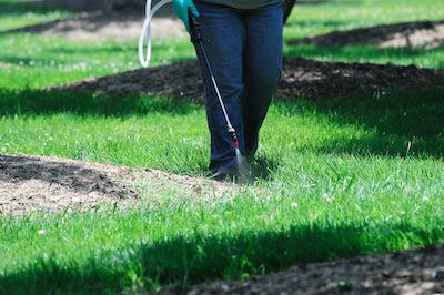 Professional weed control treatment